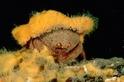 最「潮」服裝秀:螃蟹的穿衣哲學