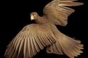 鳥類世界的人類