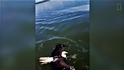 一家人救起在海中游泳的老鷹!