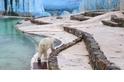 《白熊計畫》– 比利時艾瓦耶 Monde Sauvage 動物園