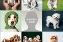 小狗有助於增進感情