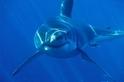 誰吃了大白鯊?