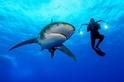 你的防曬乳裡可能有鯊魚!