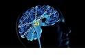 成癮的科學──受毒品影響的大腦