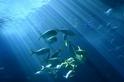 來臺博館一窺海洋生態攝影展