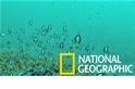 這些在混水中生活的珊瑚似乎「混」得特別好?