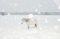 西伯利亞的孤寂