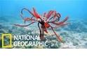 你有聽過「海羽星」這種像海中毽子的生物嗎?