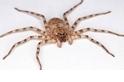 「旋轉跳躍我有八隻眼!」這隻蜘蛛的旋轉功力世界一流!