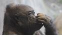 不同動物到底是怎麼挖鼻屎的呢?