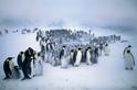 企鵝群眾學