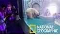 世上最悲傷的北極熊 「披薩」與媽媽團聚啦!
