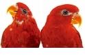 「如果你照顧到鳥類,你就照顧到世界上多數的重要問題。」