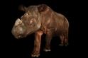 一隻世上僅存無幾的蘇門答臘犀在辛辛那提動物園辭世