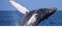 為什麼鯨魚體型這麼大?原來跟這件事有關啊