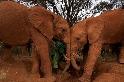 大象身上的「殭屍」基因,將是打倒癌症的關鍵?