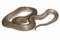 科學家在一條蛇的肚子裡面……發現了另一條全新蛇種