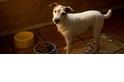 為什麼狗會在飼料碗裡撒尿?難道是飯太難吃?