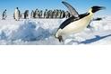 在2000萬年前,企鵝長得比你還高!