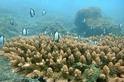 Reef Check在澎湖東西嶼坪