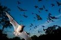 蝙蝠比蝙蝠俠更像蝙蝠俠的七件事