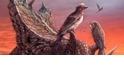 最完整北美洲反鳥類化石,竟然藏在博物館26年沒人發現?