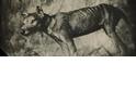 滅絕物種真的能復活嗎?袋狼基因體現生機