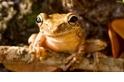 別讓青蛙走向滅亡