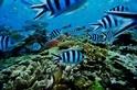 目前的海洋暖化速度,為1萬年來之最