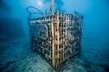 深海葡萄酒