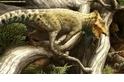 美洲新種恐龍,體型嬌小如兔
