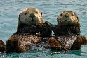 海獺會性侵海豹寶寶?企鵝連大地都不放過?這些萌物的生活可不只有賣萌而已