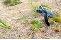小海龜與飛魚