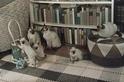貓咪可以認出牠們的祖父母嗎?