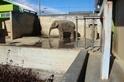 最孤單的動物園大象