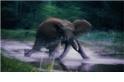 令人驚豔的野生動物照片