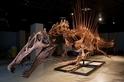 兇殘的「半水棲」恐龍可能不太會游泳