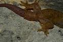 蜥蜴的斷尾求生術