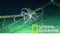 「隔空看診!」科學家利用衛星影像監控海洋生態健康