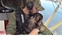 蝦米?! 這架小飛機的「副駕駛」是一隻黑猩猩?