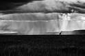 暴風雨前:草原上的長頸鹿