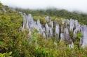 地下寶藏探險之旅 姆魯國家公園