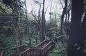 夏季森林正茂盛,鳳凰秘境的木屋小旅行