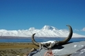 探索青藏高原的生命禁區