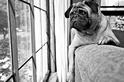 「你不要走、你不要走……」克服狗兒的分離焦慮