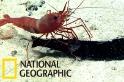 當深海蝦子對上面目猙獰的星衫魚