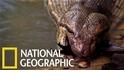神出鬼沒的「重量級」叢林巨蛇