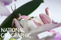 原來是蘭花啊,我還以為螳螂呢!