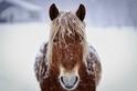 冬天的馬兒