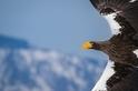空中的巨鳥